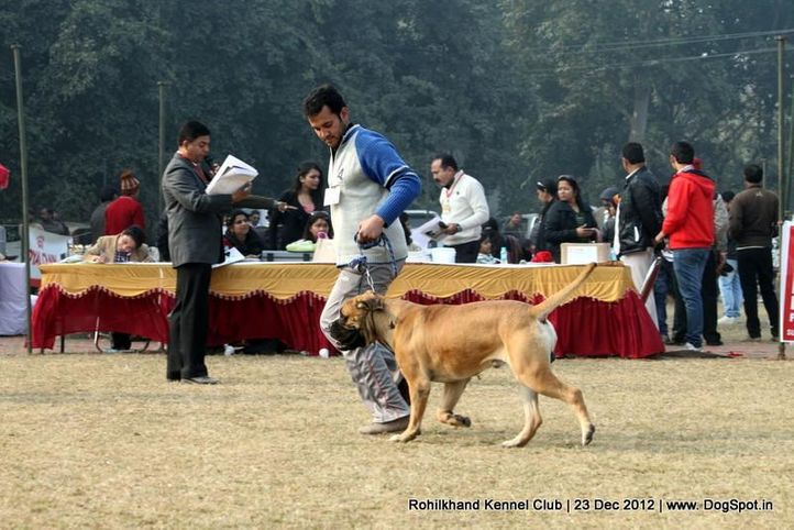 bull mastiff,ex-104,sw-74,, RAJU THE BOY, Bullmastiff, DogSpot.in