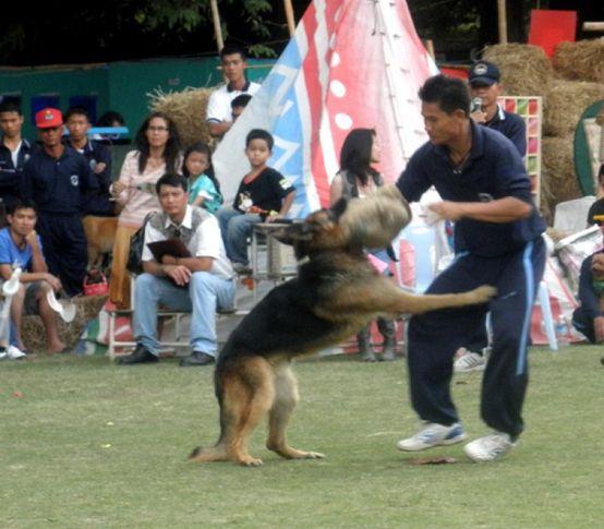 ,OLYMPUS DIGITAL CAMERA,, Rose Garden Show Thailand, DogSpot.in