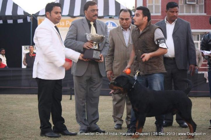 lineup,, Rottweiler Club Of India (Haryana Chapter) , DogSpot.in