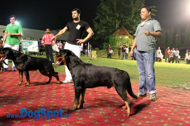 sw-36, delhi,ex-12,rottweiler,rottweiler speciality show,, ONEX OF SUNNY LAND, Rottweiler, DogSpot.in