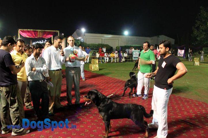 sw-36, delhi,ex-37,gaurav malik,judges,ring steward,rottweiler,rottweiler speciality show,, IRK CRNI LOTUS, Rottweiler, DogSpot.in