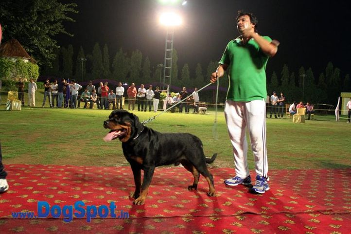 sw-36, delhi,ex-25,rottweiler,rottweiler speciality show,, VILLLI CRNI LOTOS, Rottweiler, DogSpot.in