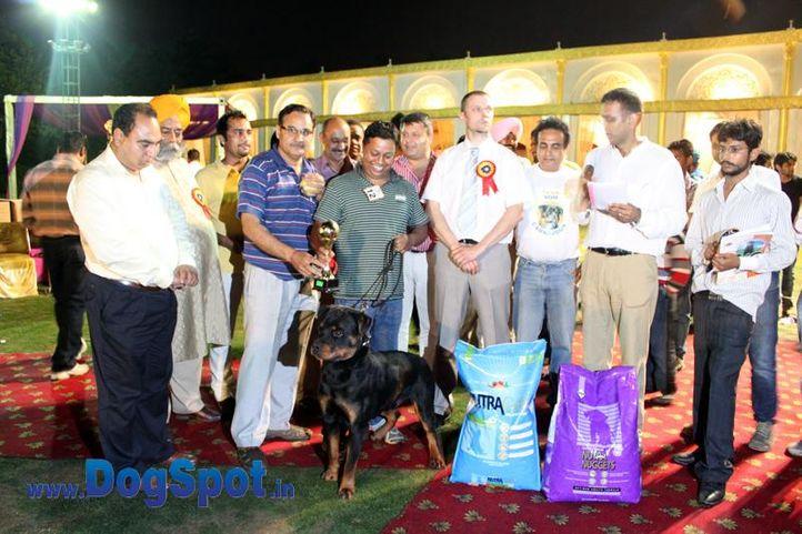 sw-36, delhi,ex-12,lineup,rottweiler,rottweiler speciality show,, ONEX OF SUNNY LAND, Rottweiler, DogSpot.in