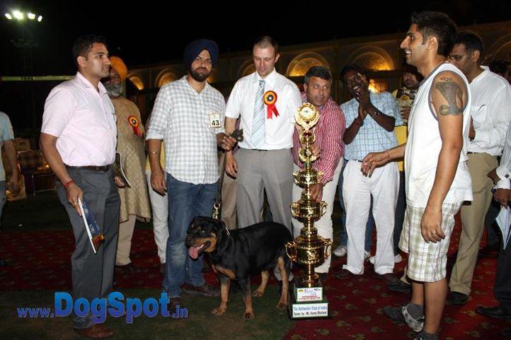 sw-36, delhi,ex-43,lineup,rottweiler,rottweiler speciality show,, Rottweiler Speciality 2011 April, DogSpot.in