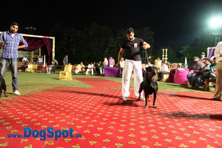 sw-36, delhi,ex-40,rottweiler,rottweiler speciality show,, DORY EARL ANTONIUS, Rottweiler, DogSpot.in