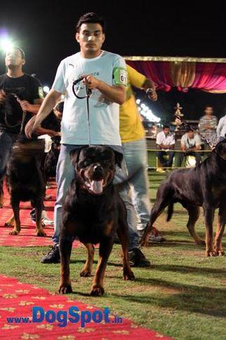 sw-36, ankit chibber,delhi,ex-1,rottweiler,rottweiler speciality show,, IN. CH TH.SRB.JR.CH.CAI VON LENCHEN, Rottweiler, DogSpot.in