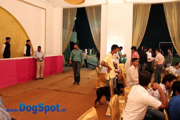 sw-36, delhi,people,rottweiler,rottweiler speciality show,, Rottweiler Speciality 2011 April, DogSpot.in