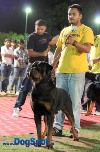 sw-36, delhi,ex-2,rottweiler,rottweiler speciality show,, TONY FLASH ROUSE, Rottweiler, DogSpot.in