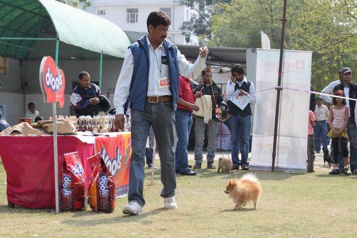 pekingese,, Royal Kennel Club Dog Show 2011, DogSpot.in