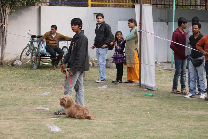 lhasa apso,, Royal Kennel Club Dog Show 2011, DogSpot.in