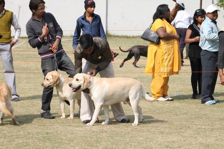 working group,, Royal Kennel Club Dog Show 2011, DogSpot.in