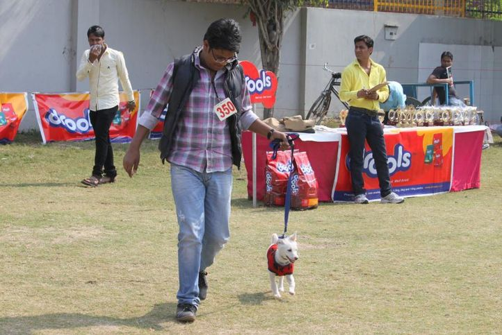 indian spitz,, Royal Kennel Club Dog Show 2011, DogSpot.in