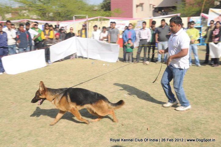 royal kennel club of india dog show 26 feb 2012, Royal Kennel Club Of India Dog Show 26 Feb 2012, DogSpot.in