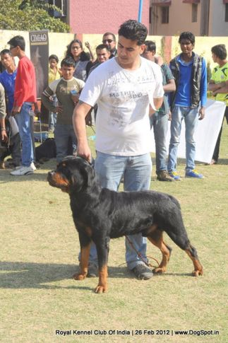 royal kennel club of india dog show 26 feb 2012, Royal Kennel Club Of India Dog Show 26 Feb 2012, DogSpot.in