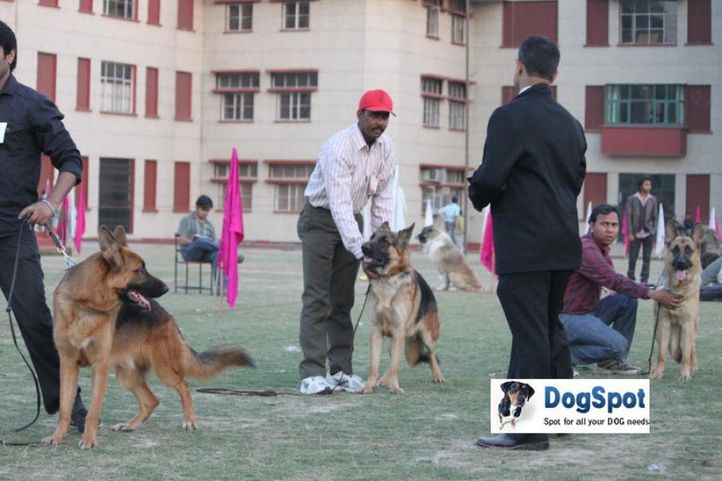 GSD,, Royal Kennel Club, DogSpot.in