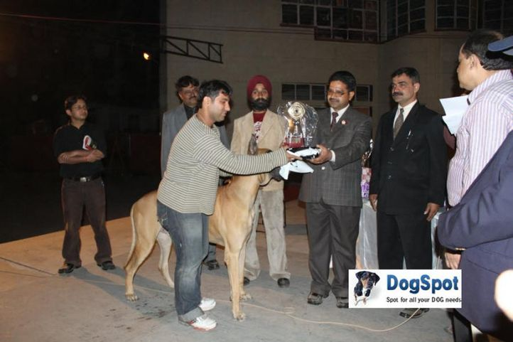 Lineup,Prize,, Royal Kennel Club, DogSpot.in