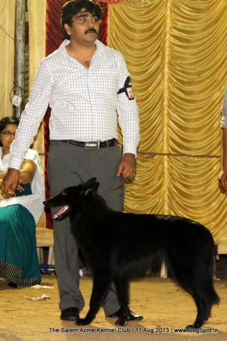 belgian shepherd,sw-85,, The Salem Acme Kennel Dog Show, DogSpot.in