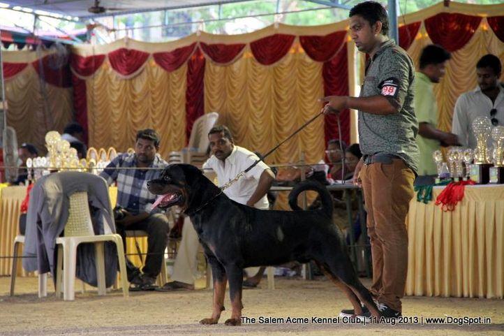 ex-198,rottweiler,sw-85,, PUJAPPURA ANISHS ROBA, Rottweiler, DogSpot.in