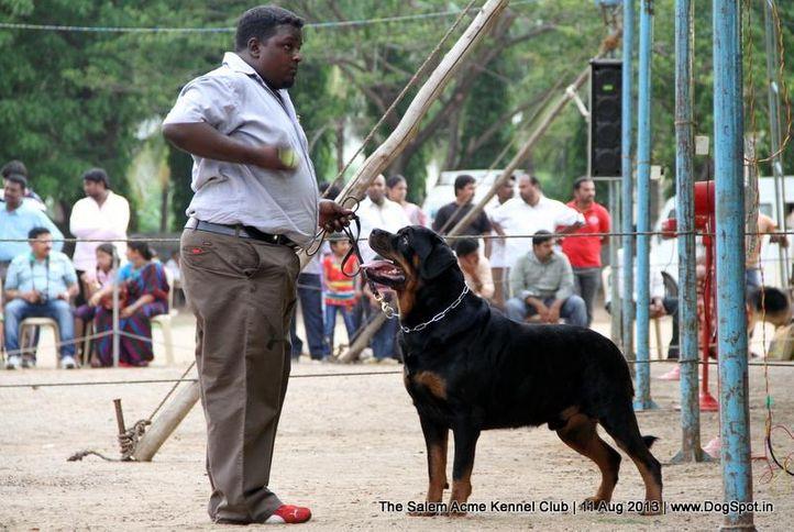 ex-203,rottweiler,sw-85,, SANYADOR'S JERANAMO JAZZ, Rottweiler, DogSpot.in