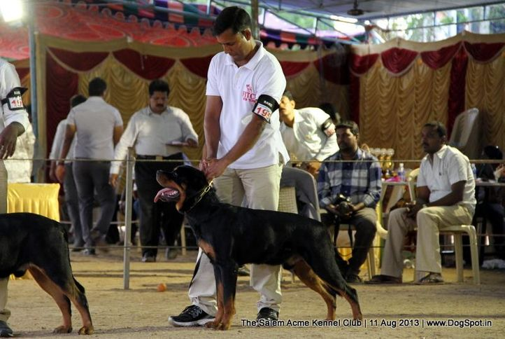 ex-195,rottweiler,sw-85,, BALKO MIKI-ROTT, Rottweiler, DogSpot.in