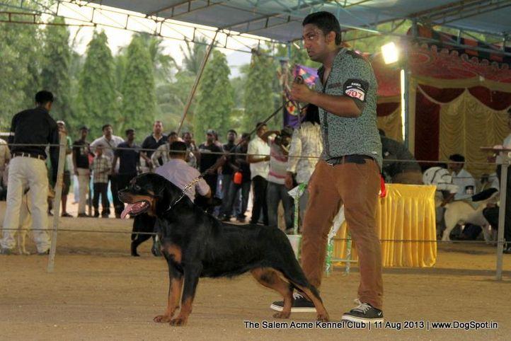 ex-207,rottweiler,sw-85,, VINO OF ROCKFIRE, Rottweiler, DogSpot.in