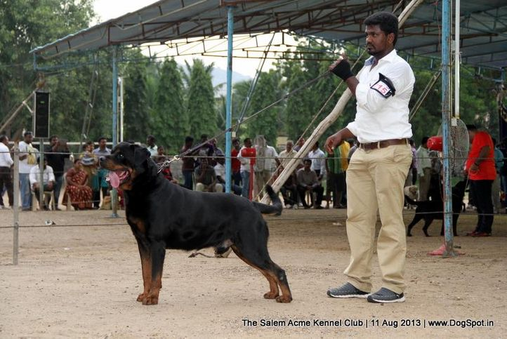 ex-215,rottweiler,sw-85,, IND. CH. SANYABORS NICLODON A MASK, Rottweiler, DogSpot.in