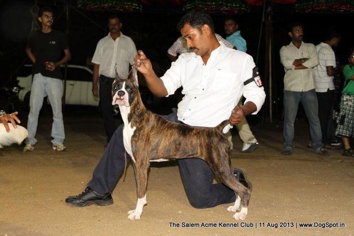boxer,ex-136,sw-85,, HIDDENITE'S SPECIAL EDDITION, Boxer, DogSpot.in