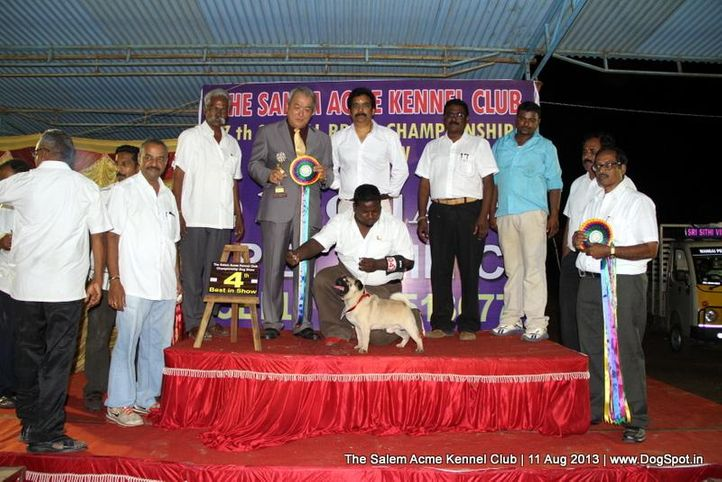 4th best in show,ex-15,line up,pug,sw-85,, BIS.IND.GR.CH.ST.HUBERT-TUPELO -KEVIN, Pug, DogSpot.in