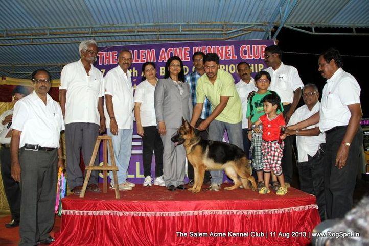 ex-256,german shepherd,line up,reserve best puppy in show,sw-85,, APPLES ULLI, German Shepherd Dog, DogSpot.in
