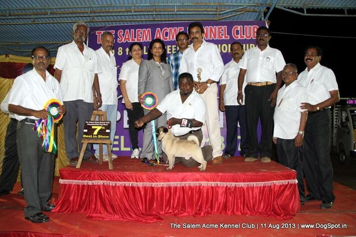 7th best in show,ex-15,line up,pug,sw-85,, BIS.IND.GR.CH.ST.HUBERT-TUPELO -KEVIN, Pug, DogSpot.in