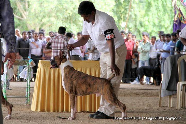boxer,ex-125,, Salem Dog Show 2013, DogSpot.in