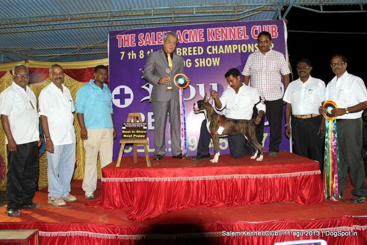 best puppy in show,boxer,ex-136,line up,, Salem Dog Show 2013, DogSpot.in