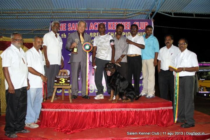 3rd best in show,ex-217,line up,rottweiler,, Salem Dog Show 2013, DogSpot.in