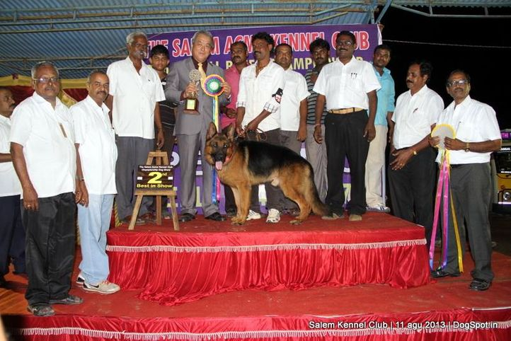 2 nd best in show,ex-254,german shepherd,line up,, Salem Dog Show 2013, DogSpot.in