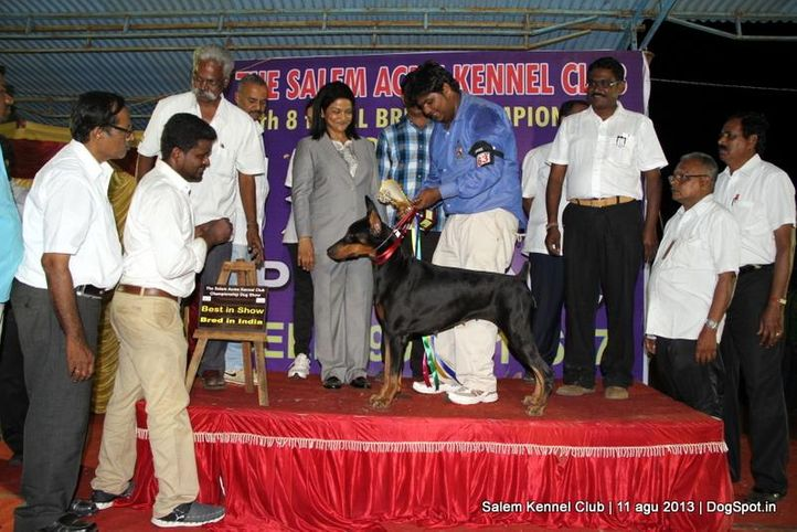 breed in india,dobermann,ex-163,line up,, Salem Dog Show 2013, DogSpot.in