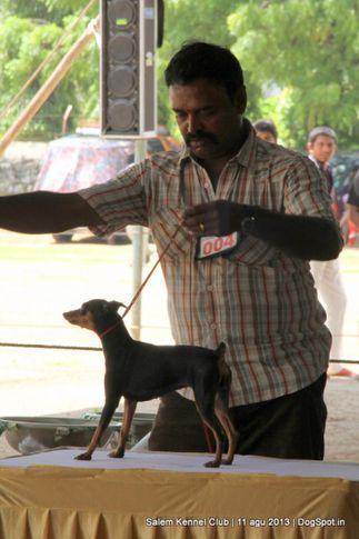 ex-4,miniature pinscher,, Salem Dog Show 2013, DogSpot.in