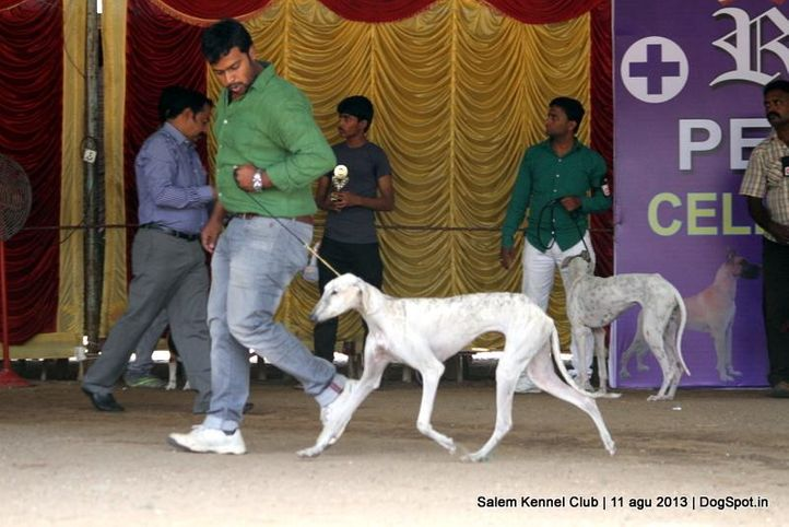 caravan hound,, Salem Dog Show 2013, DogSpot.in
