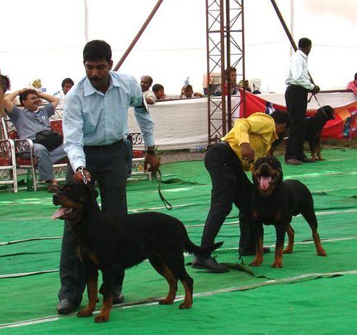 sangli show, sangli show, DogSpot.in