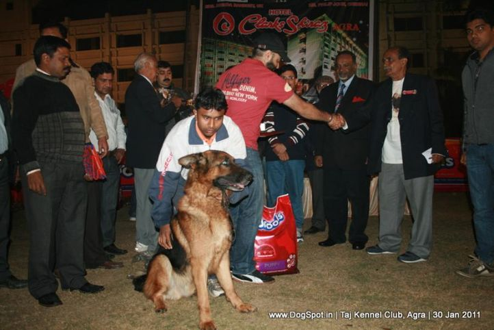 ex-201,lineup,sw-31,, NEXX VOM SUENTELSTEIN, German Shepherd Dog, DogSpot.in