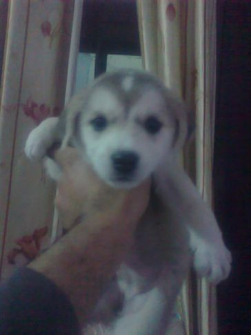 , shelly kennels, DogSpot.in