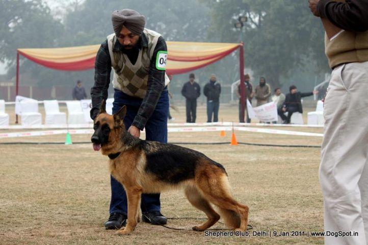 ex-42,sw-20,, GINA OF ZEDEX, German shepherd dog, DogSpot.in