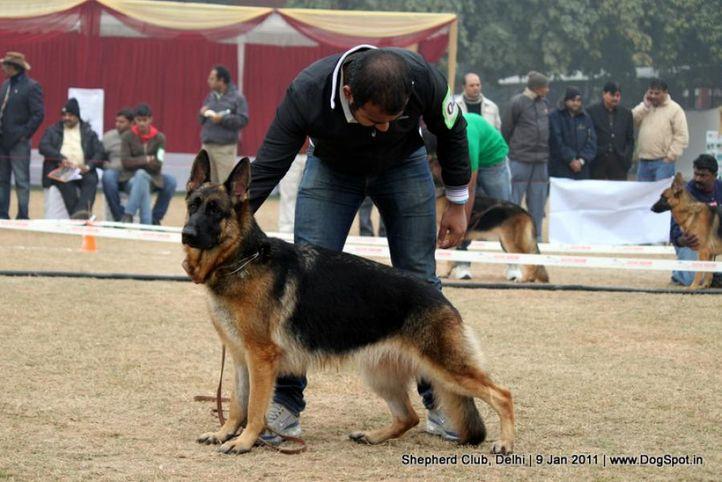 ex-45,sw-20,, ERA OF DEEJAY, German shepherd dog, DogSpot.in