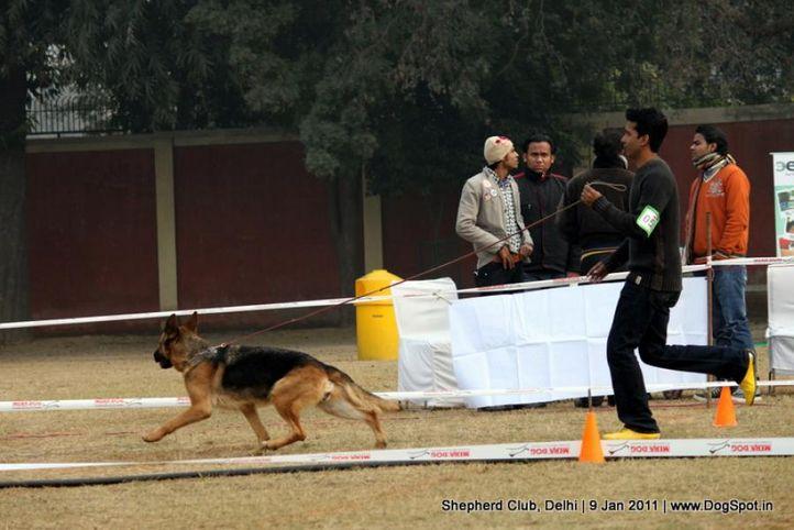 ex-53,sw-20,, PENNY VON ARMINIUS 2000, German shepherd dog, DogSpot.in