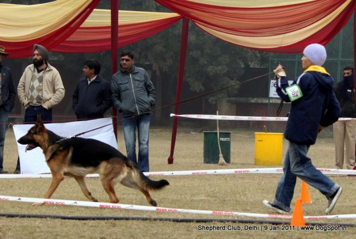 ex-67,sw-20,, XARKO VON NIMBUS, German shepherd dog, DogSpot.in