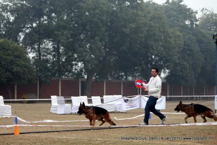 ex-74,sw-20,, YAKO VON NOORT, German shepherd dog, DogSpot.in