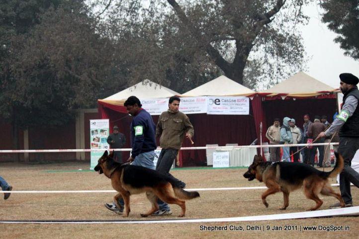 ex-85,sw-20,, ZARNO VON DER NORISWAND, German shepherd dog, DogSpot.in