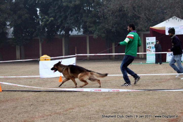 ex-101,sw-20,, CRUISE OF RISING STAR, German shepherd dog, DogSpot.in