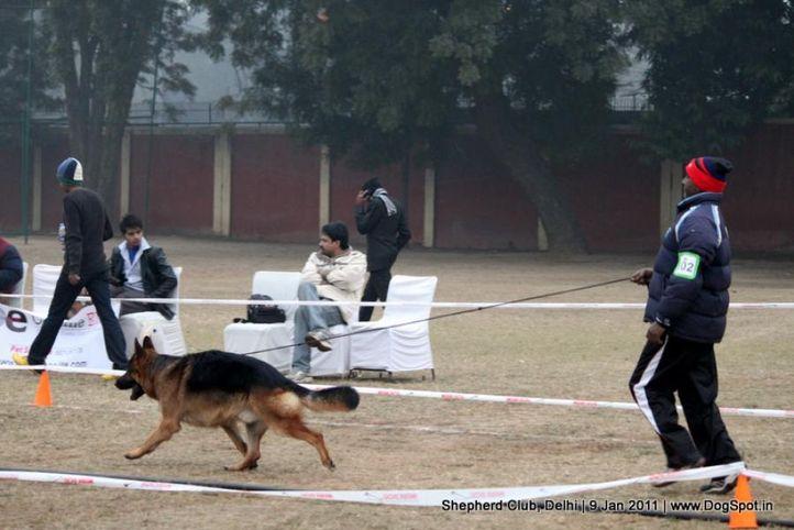 ex-102,sw-20,, ROCKEY, German shepherd dog, DogSpot.in