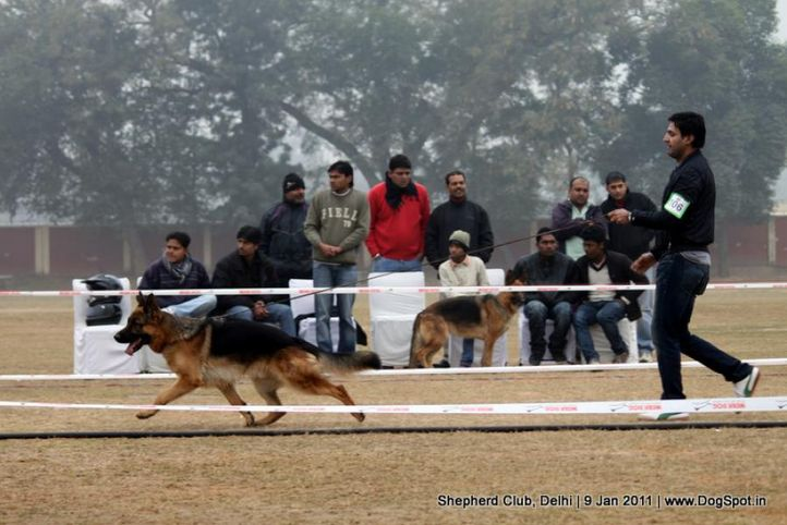 ex-106,sw-20,, Shepherd Club Delhi, DogSpot.in