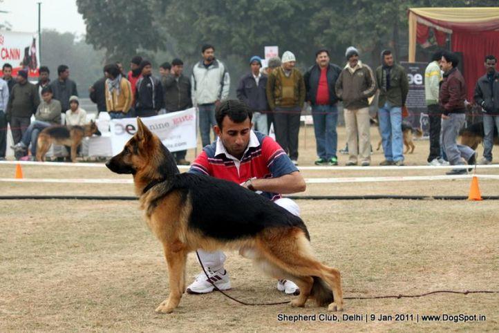 ex-122,sw-20,, URSUSKO OF PURVA, German shepherd dog, DogSpot.in